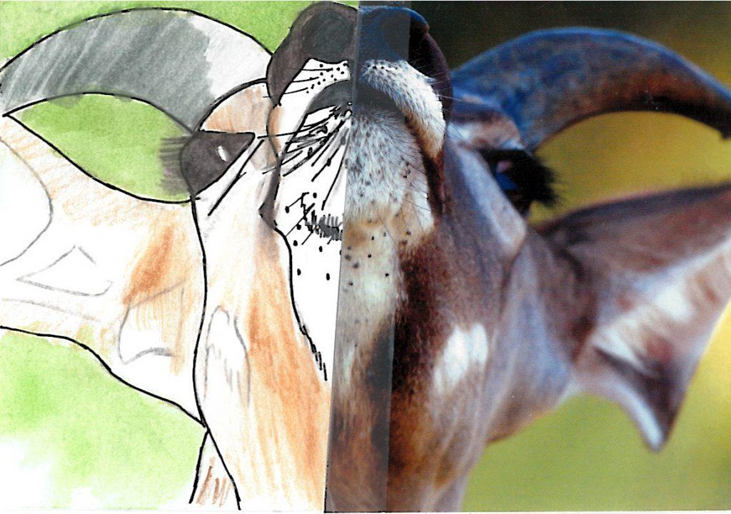 004a - Kudu portrait Okavango Delta Botswana