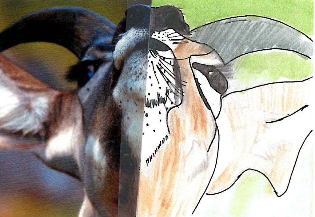 004b - Kudu portrait Okavango Delta Botswana