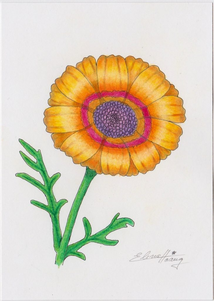 010 - Chrysanthemum