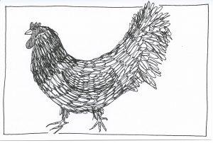 13_365.3 slightly haughty chicken