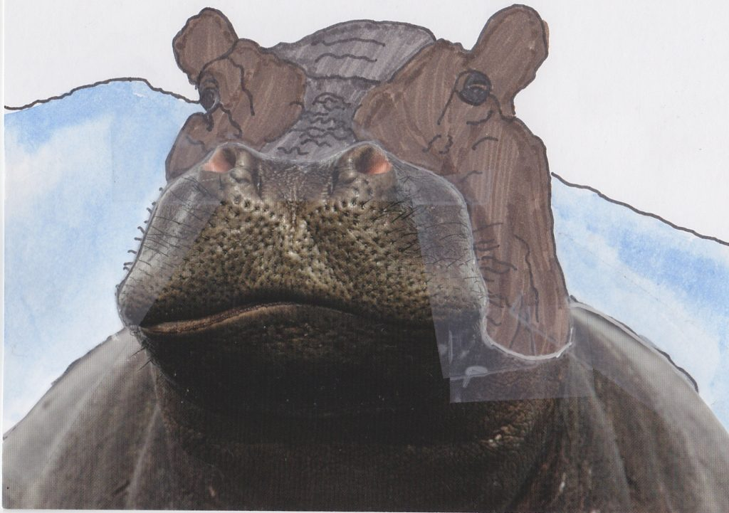 012a - Hippo Mombo Okavango Delta Botswana