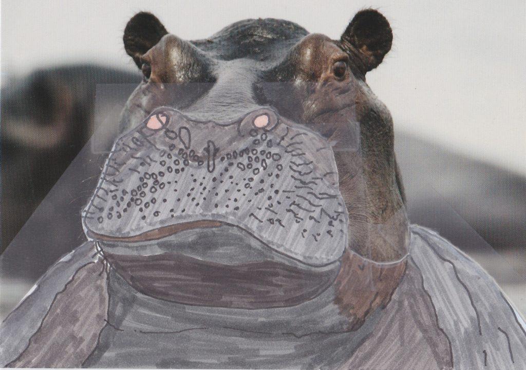 012b - Hippo Mombo Okavango Delta Botswana