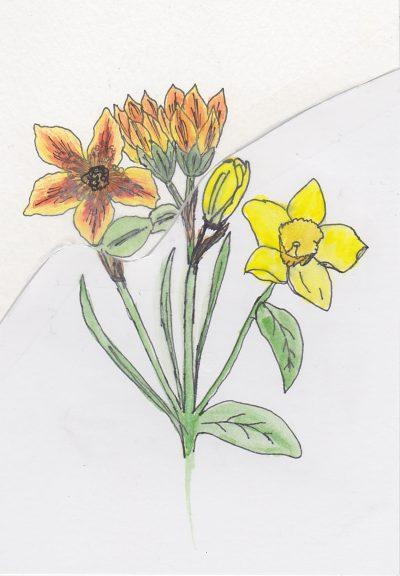 016a - 08 Feb 2015 Unknown flower Daffodil interpretation