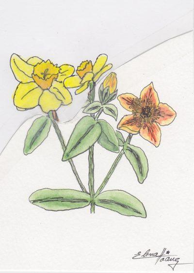 016b - 08 Feb 2015 Unknown flower Daffodil interpretation