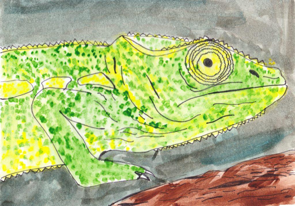 026 - Chameleon Nosy Komba Madagascar