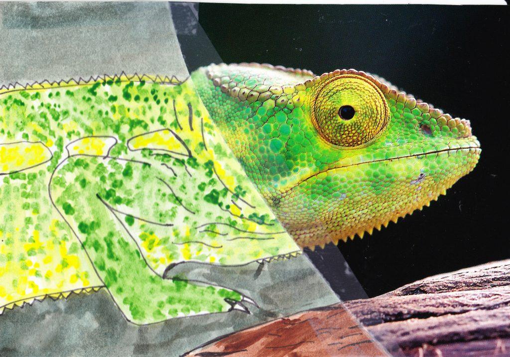 026a - Chameleon Nosy Komba Madagascar