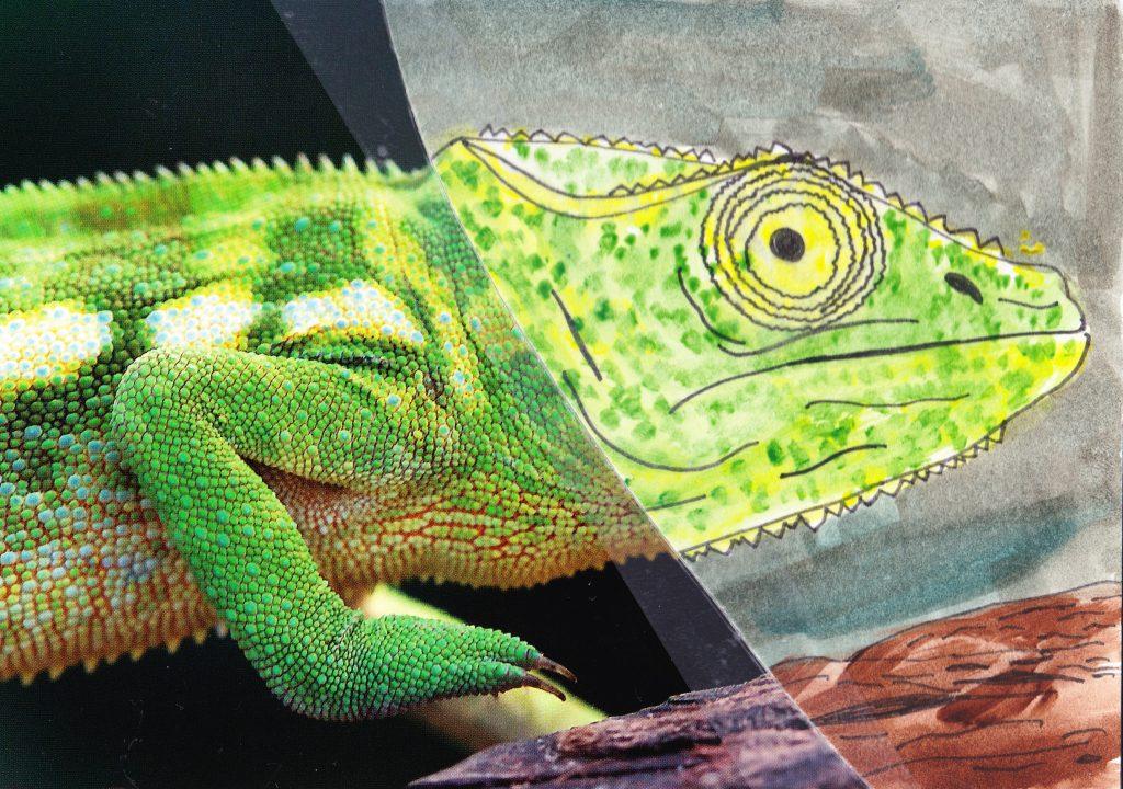026b - Chameleon Nosy Komba Madagascar
