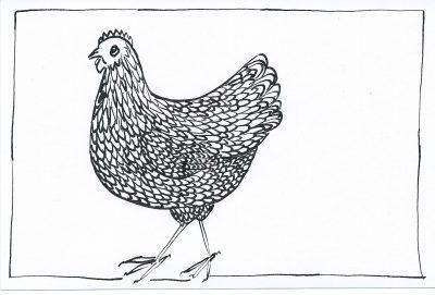 49_365.3 chubby chicken