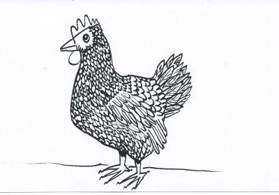 50_365.3 hesitant chicken