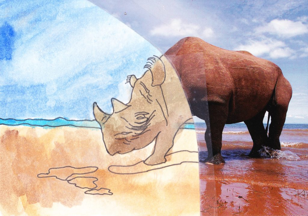 037a - Rhino on the beach Lake Kariba Zimbabwe