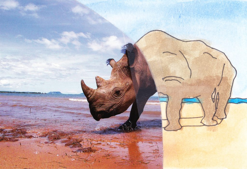 037b - Rhino on the beach Lake Kariba Zimbabwe