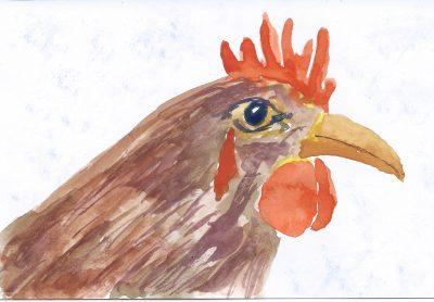 138_365-3-rather-impulsive-chicken